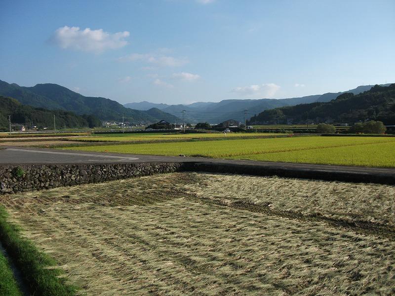 稲刈りが始まった田んぼ